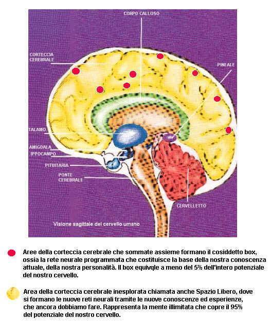 cervello ri