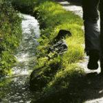 Cammino Consapevole