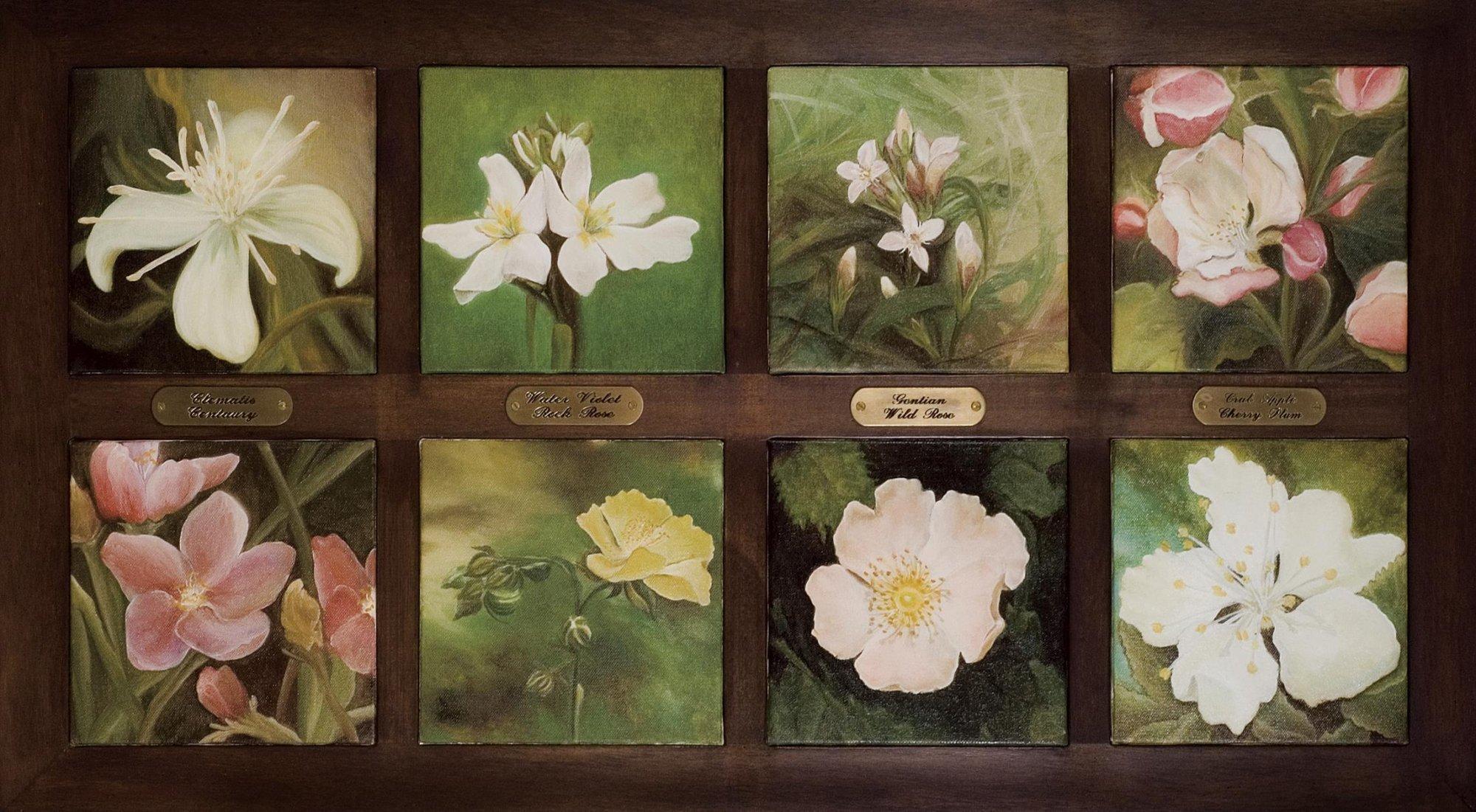 Suddivisione dei fiori di Bach