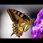 FILM: Il Circo della Farfalla