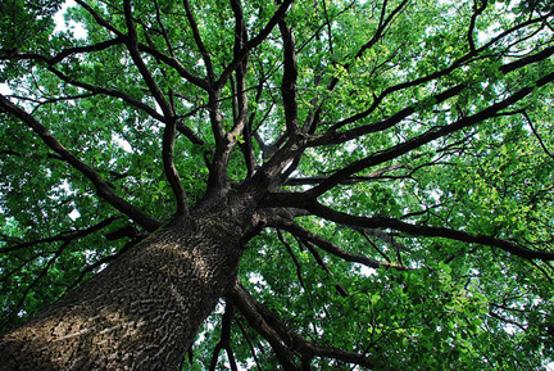 Le radici nel vento visione alchemica for Foto di alberi da colorare