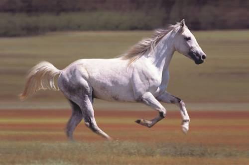 cavalli_02