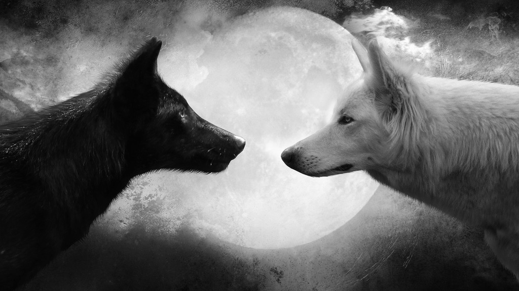 free-download-black-and-white-wolf-pictures-hd-animals-desktop