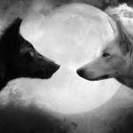 Quale lupo prospera in te?