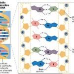 Scoperta Russa sul DNA: le parole e le frequenze influenzano e riprogrammano il DNA
