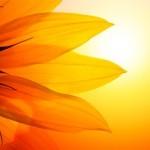 IL SOLE FA BENE… come beneficiarne senza controindicazioni