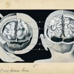 SIGNATURA RERUM: alimenti che curano l'organo a cui assomigliano