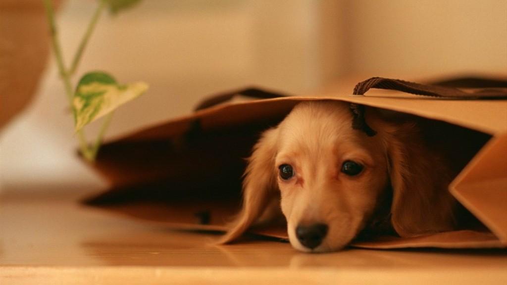 cane-paura1