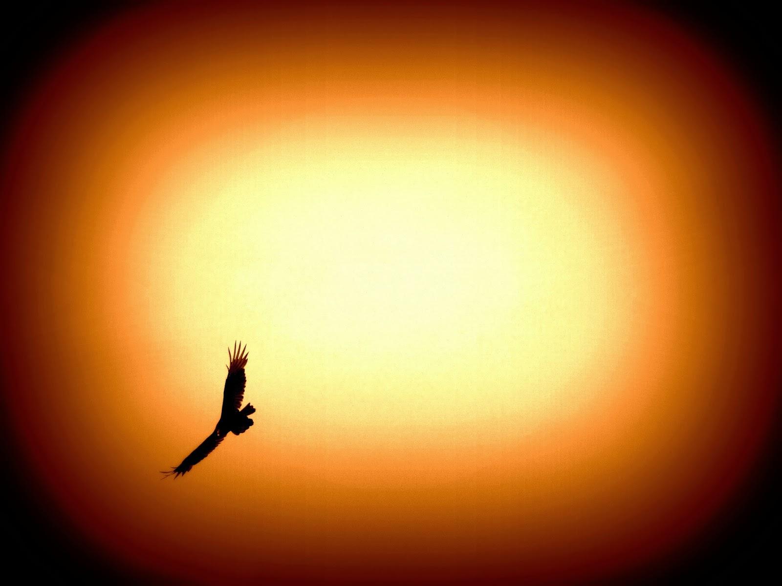 volo del condor