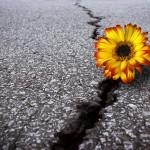 CERVELLO EMOTIVO: 10 CARATTERISTICHE DELLE PERSONE RESILIENTI