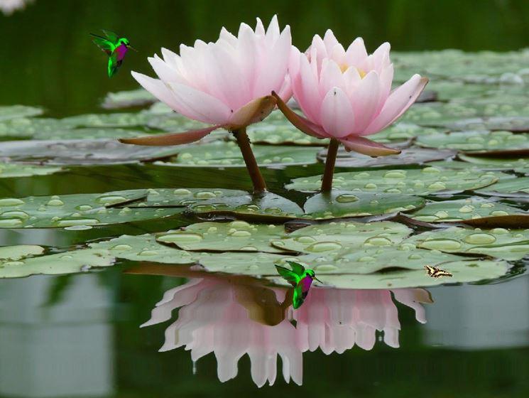 fiori-per-un-uomo_NG1