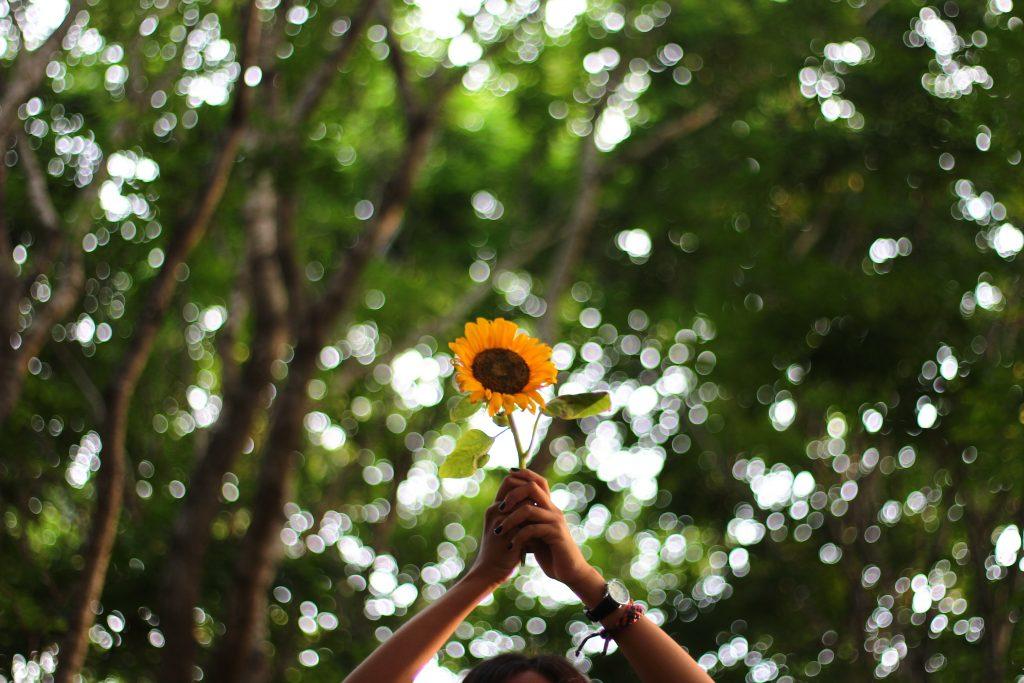flower-1245700