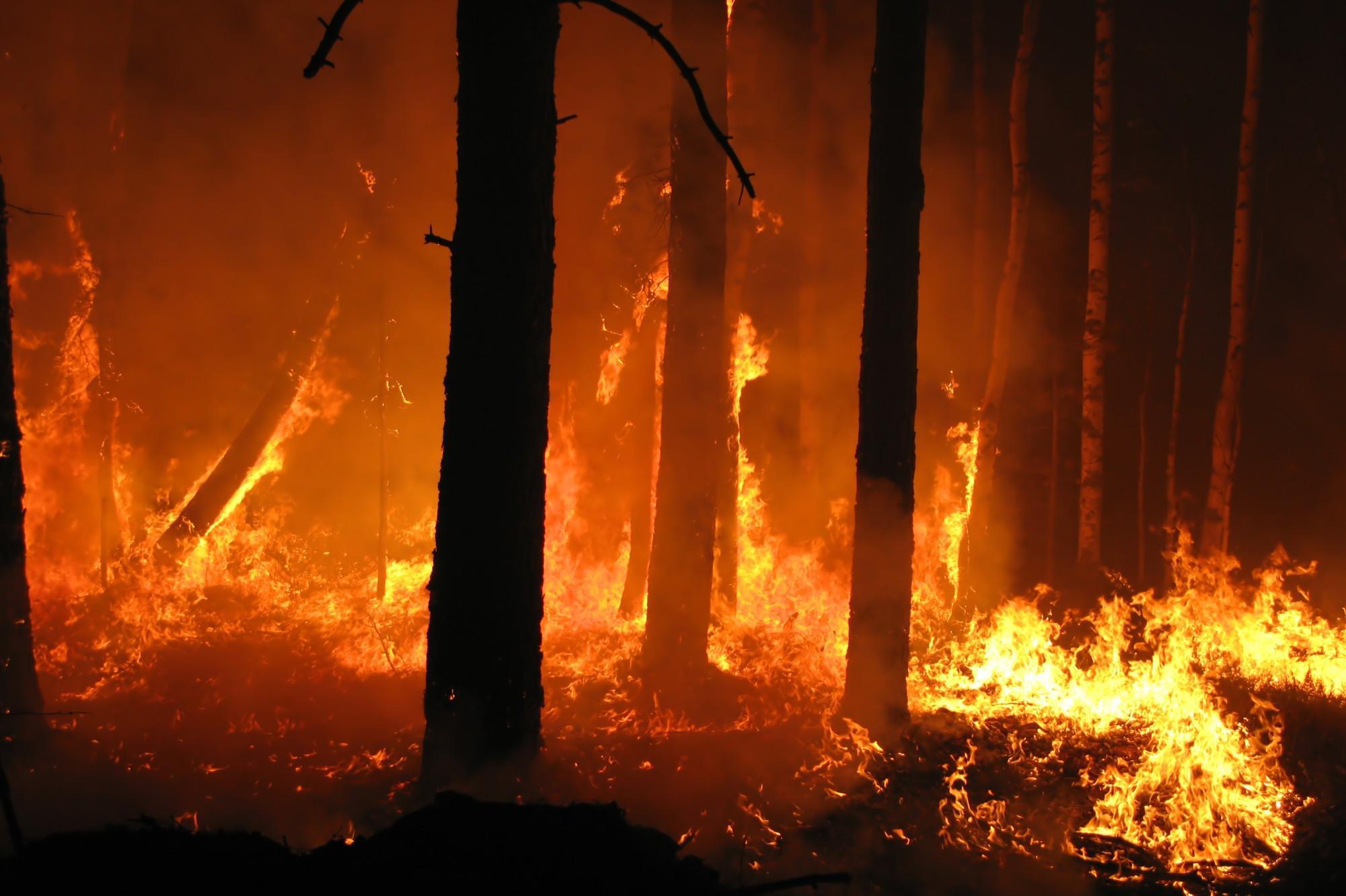 incendio-boschivo