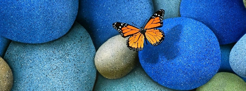 1372535588_yellow-butterfly-on-blue-stone_facebk