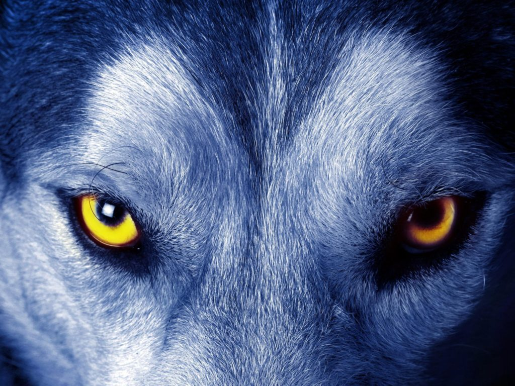 2048x1536_wolf-eye-desktop