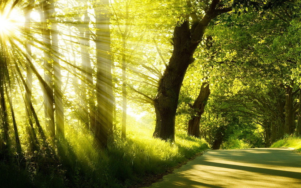 luce-fragli-alberi