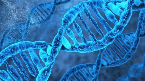 RIVOLUZIONE EPI-GENETICA: UN NUOVO APPROCCIO ALL'EVOLUZIONE