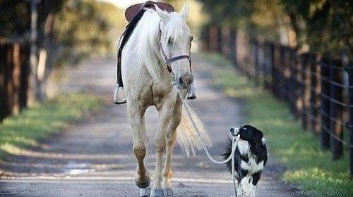 cavallo-cane.scale-to-max-width.500x