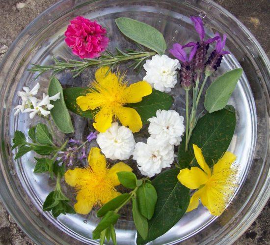 fiori San Giovanni 2