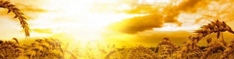 SOLSTIZIO D'ESTATE PARTE IV – RADICARE LA VIBRAZIONE DEL CUORE PURO – MARTE IN QUINCONCE CON URANO E IN TRIGONO CON CHIRONE